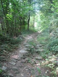 the woods bergolo