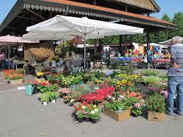 alba-market
